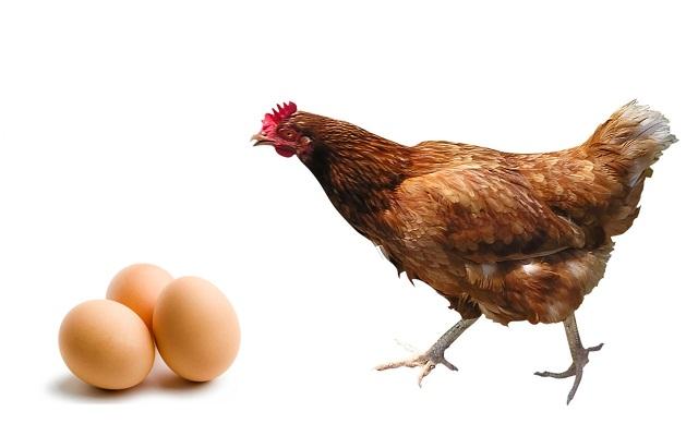 ovo-ou-galinha